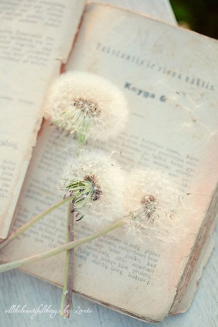 Novel A Dandelion Wish vintage book and dandelion beautiful pics beautiful flower and chang e 3