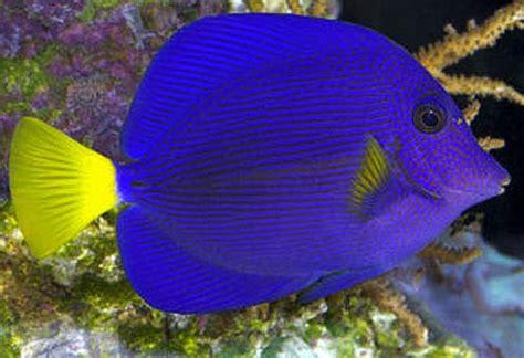 brightly colored fish pretty tropical fish