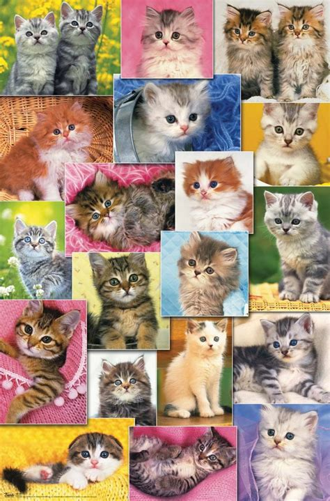 cat wallpaper collage cat collage pixdaus