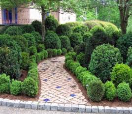 evergreen landscaping 8 deer resistant evergreen shrubs to plant this fall