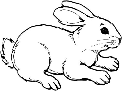 and rabbit free rabbit coloring pages