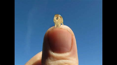 smallest breed in the world image gallery littlest