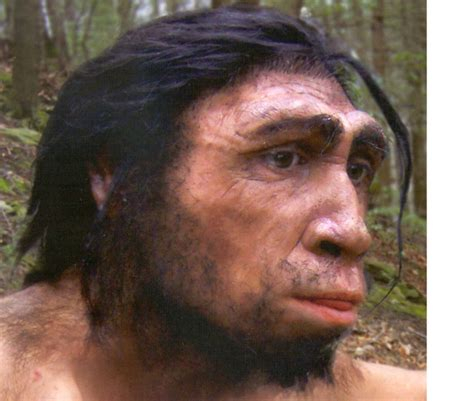 manelyk wiki evolucionismo wiki newhairstylesformen2014 com