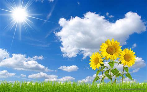 beautiful blue sky sunflowers windows  wallpapers