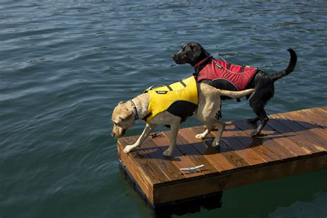 dog boat float which coat floats your boat ruffwear blog news