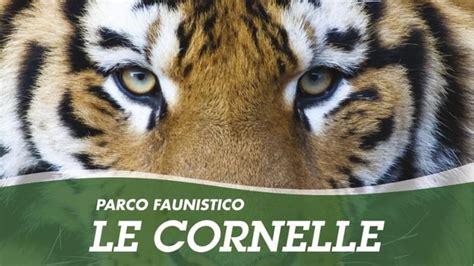 costo ingresso parco delle cornelle gli zoo pi 249 belli e grandi d italia da visitare