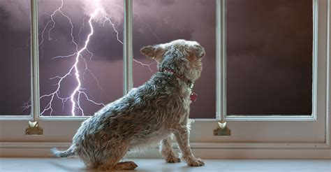 afraid of thunder remedies for dogs fear of thunder