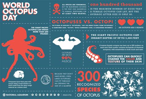 world octopus day daily infographic