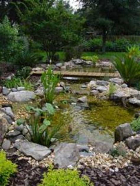 Backyard water gardening for wildlife in Tampa Bay area.