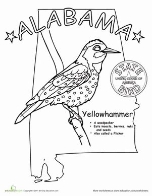 yellowhammer coloring page alabama state bird worksheet education com