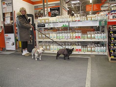 are dogs allowed at home depot these friendly stores invite you to bring your best friends a must for