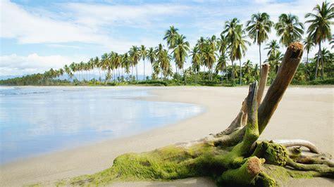 wallpaper untuk laptop 14 tropical shore and palms wide screen wallpaper junkinside
