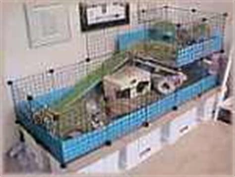 gabbie cavie peruviane la gabbia come deve essere
