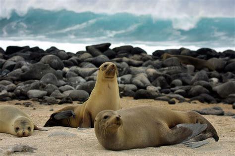 imagenes animales galapagos lecciones de ciencia en las islas gal 225 pagos