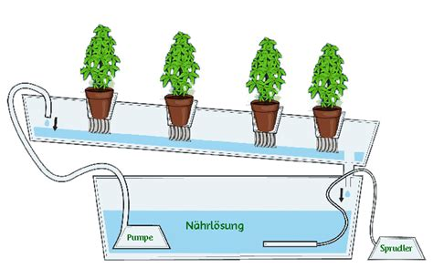 hydroponik aeroponik aquaponik 1 teil grundlagen