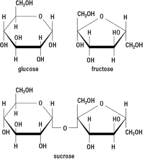 carbohydrates used for structure carbohydrate chemical structure www pixshark