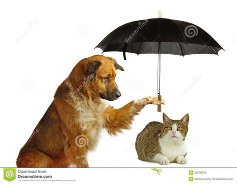 een dierenspeciaalzaak met een u de hond beschermt een kat met een paraplu stock afbeelding