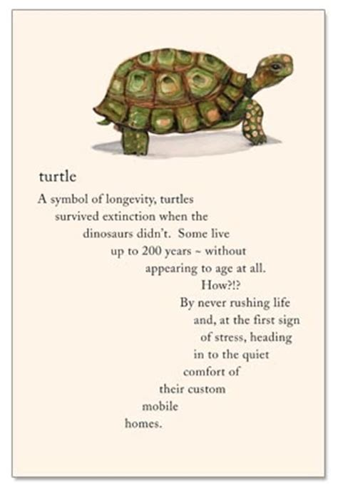 Turtle Birthday Card Turtle Birthday Card Cardthartic Com