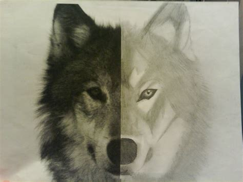 half wolf half half half wolf drawing