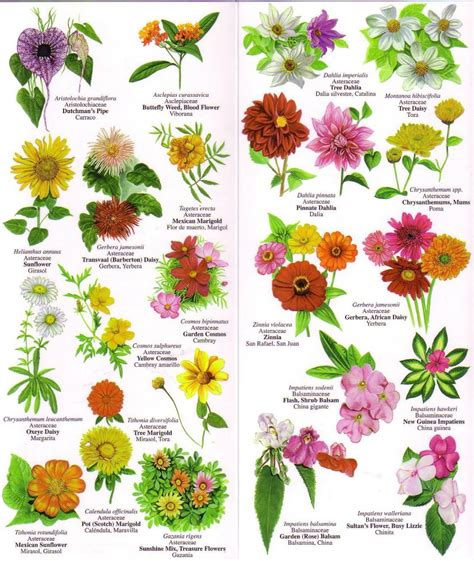 flowers chart with names in english 195410 1 jpg vintage charts pinterest english flowers