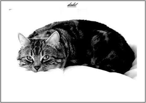 Photo De Dormeur by Le Roi Dormeur Photo Et Image Animaux Animaux