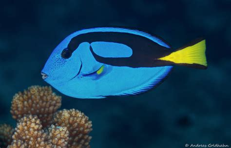 colorful fish  fiji underwater photography guide