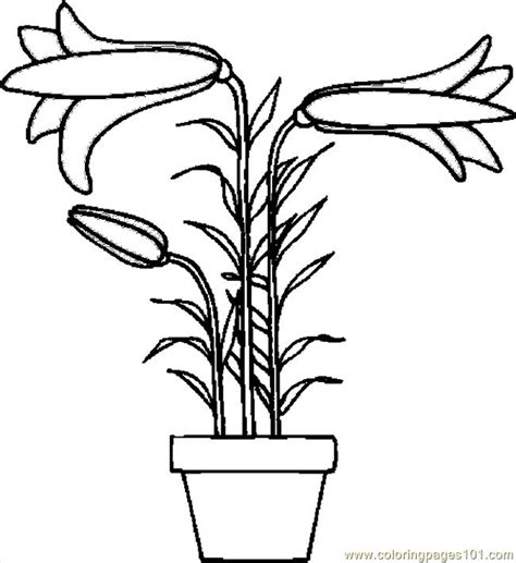 coloring pictures of easter lilies drawing holidays coloring pages
