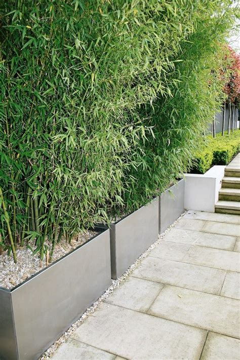 Narrow Plant Pots What Depth Is That Container And Is That A Clumping Bamboo