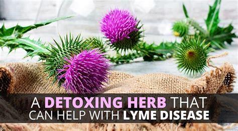 Burbur Detox Lyme by Treat Your Symptoms With The Promising Detoxifying Burbur