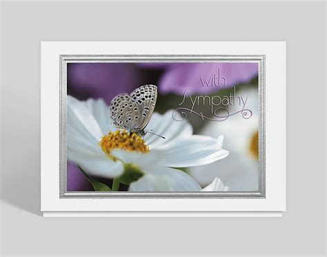 butterfly sympathy card  business christmas cards