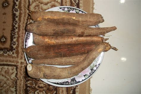 pondok rahmat racun  ubi kayu