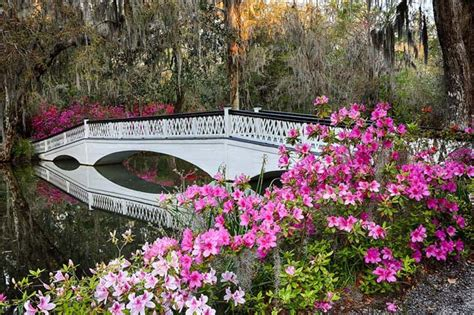Magnolia Garden by Magnolia Plantation And Gardens Charleston South Carolina Sc