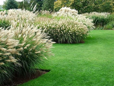 17 Best Ideas About Grass On Pinterest Landscaping Tips Grass Garden Design 2