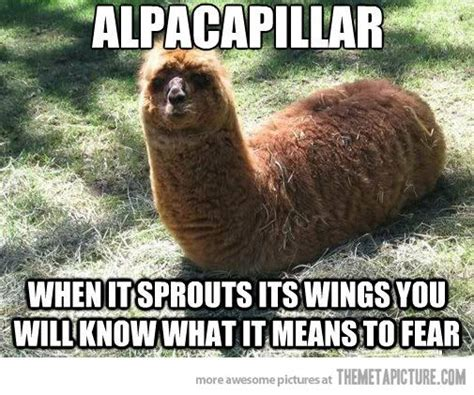 28 best alpaca memes images on pinterest funny pics