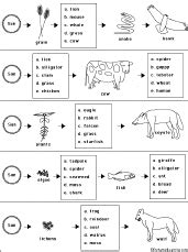 food web worksheet