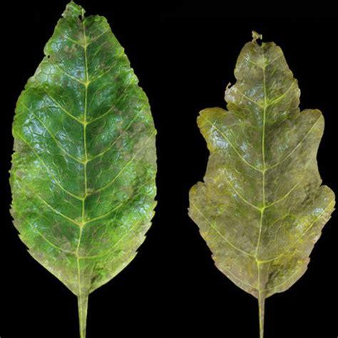 zbrush leaf tutorial hugo beyer