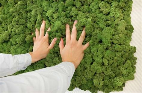 Live Moss Shower Mat by 43 Living Moss Products