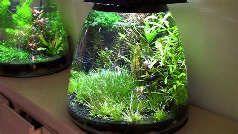 design aquarium nano update self made design nano aquarium youtube