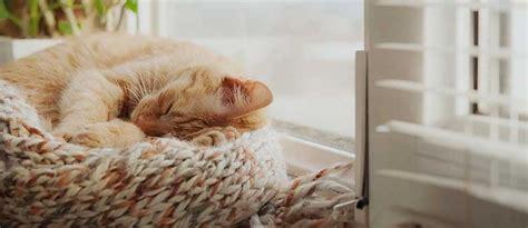 wie lange schlafen neugeborene wie viel schlaf brauchen katzen tierisch wohnen