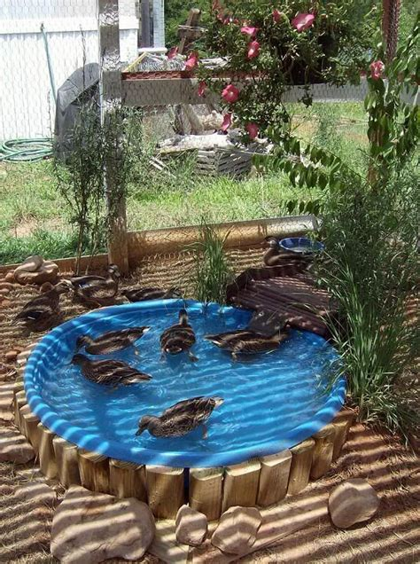 Backyard Duck Pond Ideas Quot Added A In The Kiddy Swimming Pool And Put In A Standard Cork The Bottom I Made A
