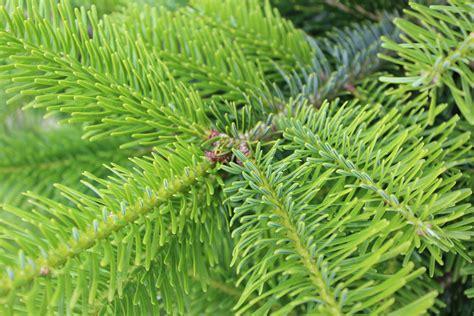 weihnachtsbaum mit ballen kaufen best 28 weihnachtsbaum mit ballen 28 images best 28 weihnachtsb 228 ume aus der
