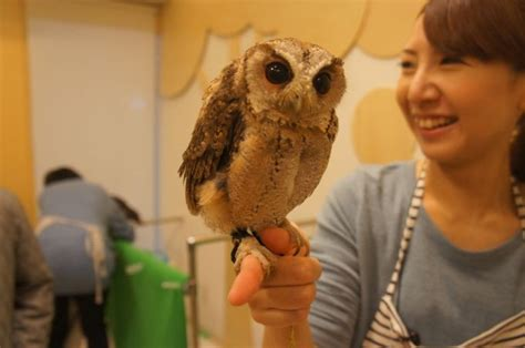 Owl Lucu 7 pet cafe terbaru jepang menuai kritik lihat deh 10 gambar
