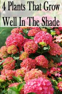 Plants that grow well in the shade