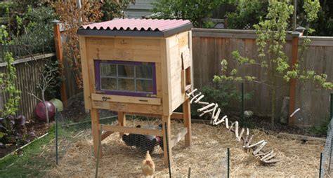chickens for backyards raising backyard chickens for dummies