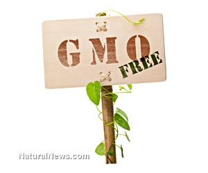 How Does It Take To Detox From Gmos by Food Health And Medicine August 2013