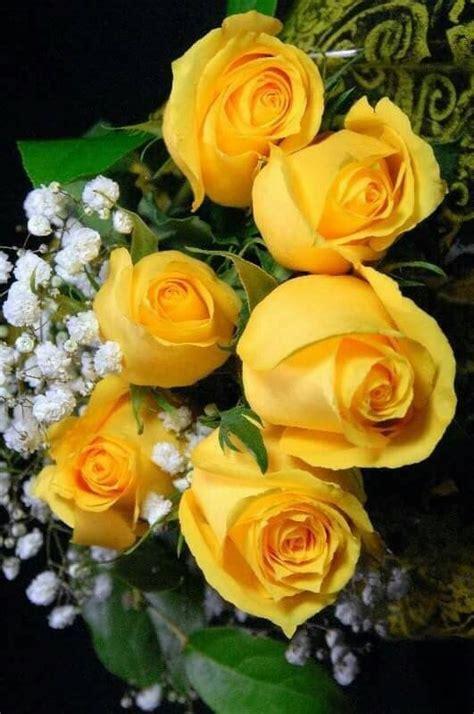 imagenes de rosas hermosas amarillas las 25 mejores ideas sobre rosas amarillas en pinterest