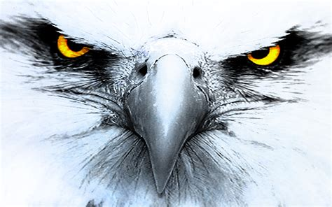 eagle tattoo wallpaper 337 eagle hd wallpapers background images wallpaper abyss