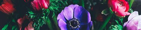 profumi fioriti profumi fioriti