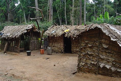 Peoples Home by Forest Peoples