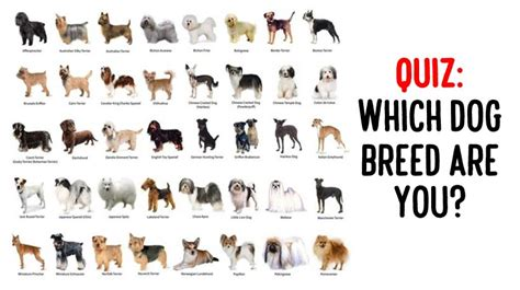 which breed are you what breed are you the best of 2017